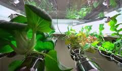 jardin bouteille, biocité